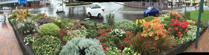 Kiama.  Garden bed with bright coloured flowers and bushes in the main street.